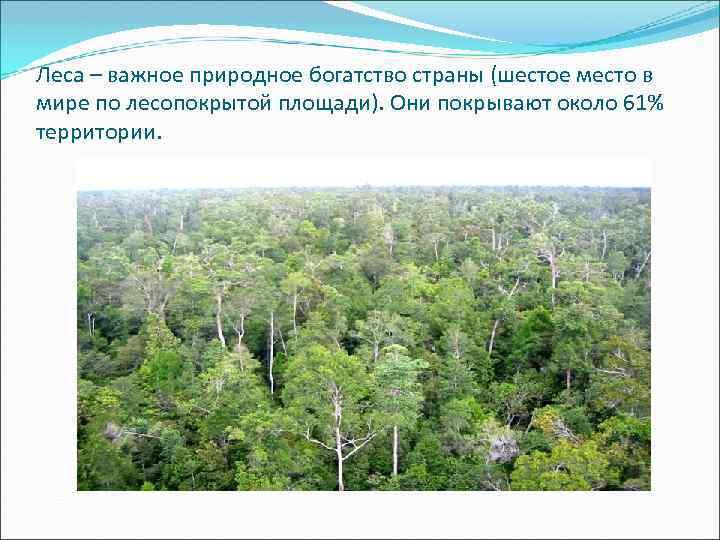 Леса – важное природное богатство страны (шестое место в мире по лесопокрытой площади). Они