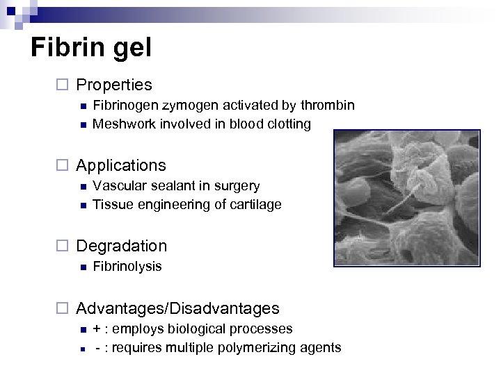 Fibrin gel ¨ Properties n n Fibrinogen zymogen activated by thrombin Meshwork involved in