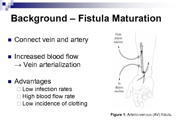 Background – Fistula Maturation n Connect vein and artery n Increased blood flow →