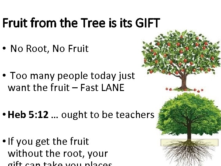 Fruit from the Tree is its GIFT • No Root, No Fruit • Too