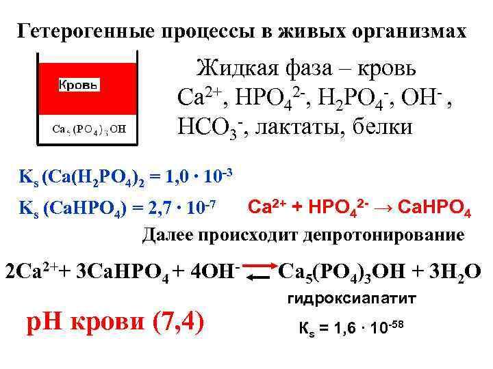 Гетерогенные процессы в живых организмах Жидкая фаза – кровь Са 2+, НРО 42 -,