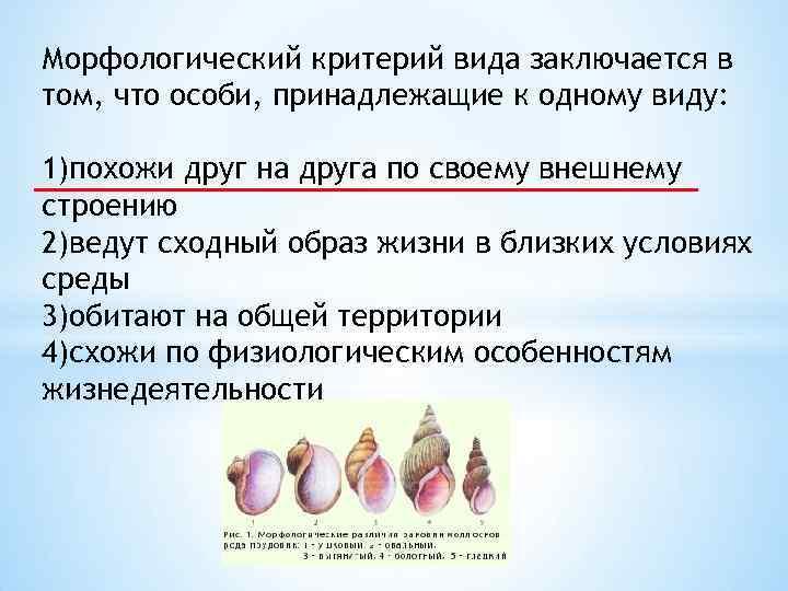 Морфологический критерий вида заключается в том, что особи, принадлежащие к одному виду: 1)похожи друг
