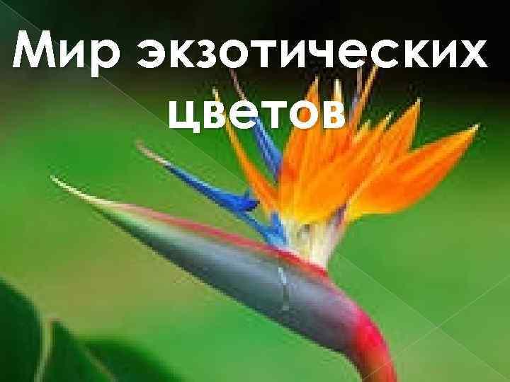 Мир экзотических цветов