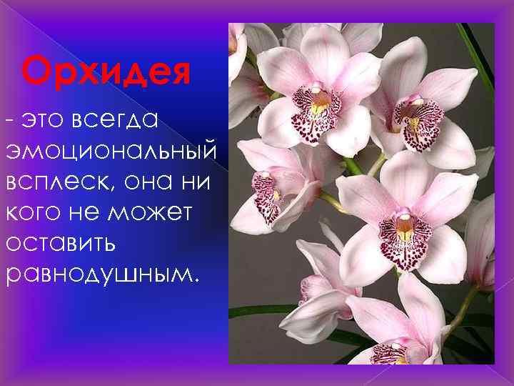 Орхидея - это всегда эмоциональный всплеск, она ни кого не может оставить равнодушным.