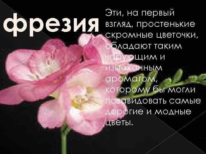 фрезия Эти, на первый взгляд, простенькие скромные цветочки, обладают таким чарующим и изысканным ароматом,