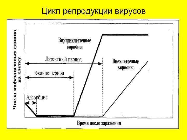 Цикл репродукции вирусов