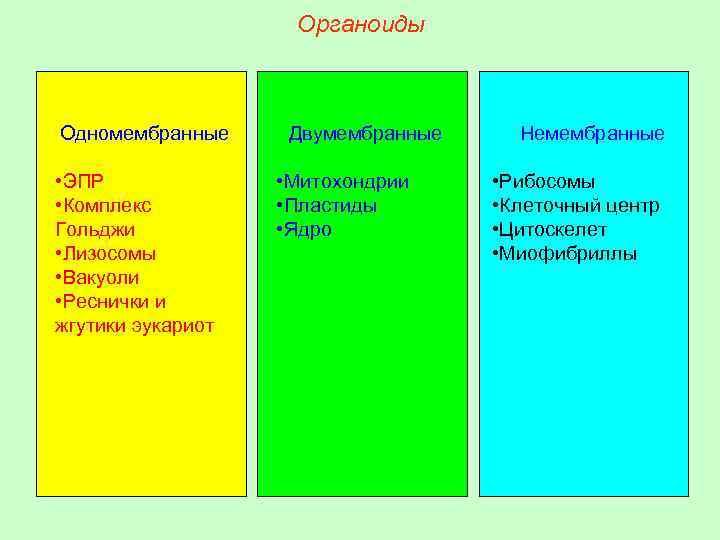 Органоиды Одномембранные • ЭПР • Комплекс Гольджи • Лизосомы • Вакуоли • Реснички и