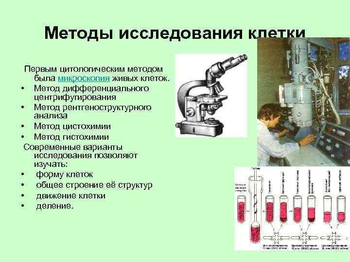 Методы исследования клетки Первым цитологическим методом была микроскопия живых клеток. • Метод дифференциального центрифугирования