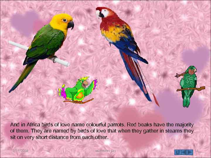 And in Africa birds of love name colourful parrots. Red beaks have the majority