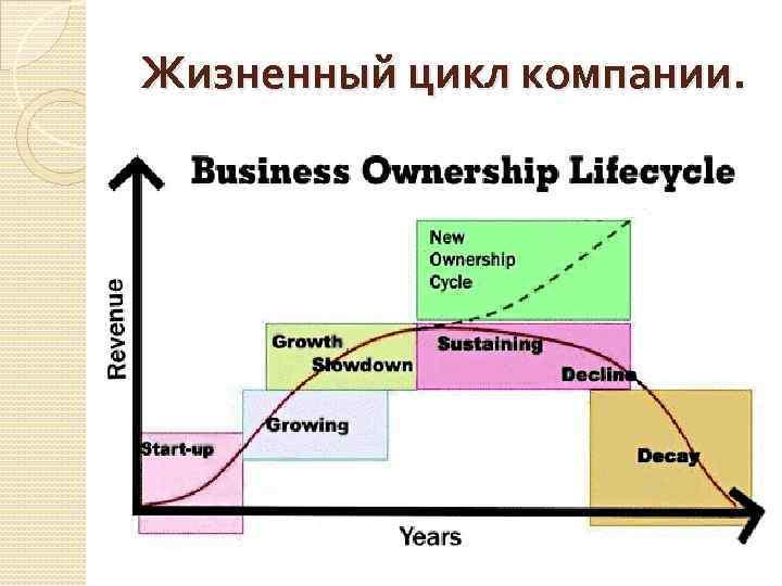 Жизненный цикл компании.