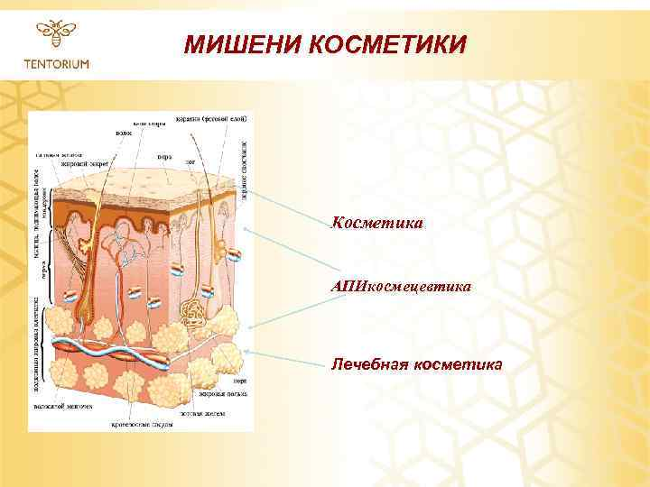 МИШЕНИ КОСМЕТИКИ Косметика АПИкосмецевтика Лечебная косметика