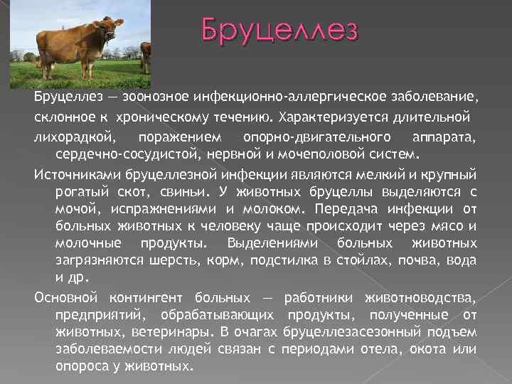 Бруцеллез — зоонозное инфекционно-аллергическое заболевание, склонное к хроническому течению. Характеризуется длительной лихорадкой, поражением опорно-двигательного