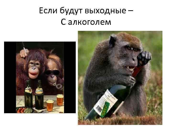 Прикольные картинки про выходные с надписями новые выпивка, квадратной