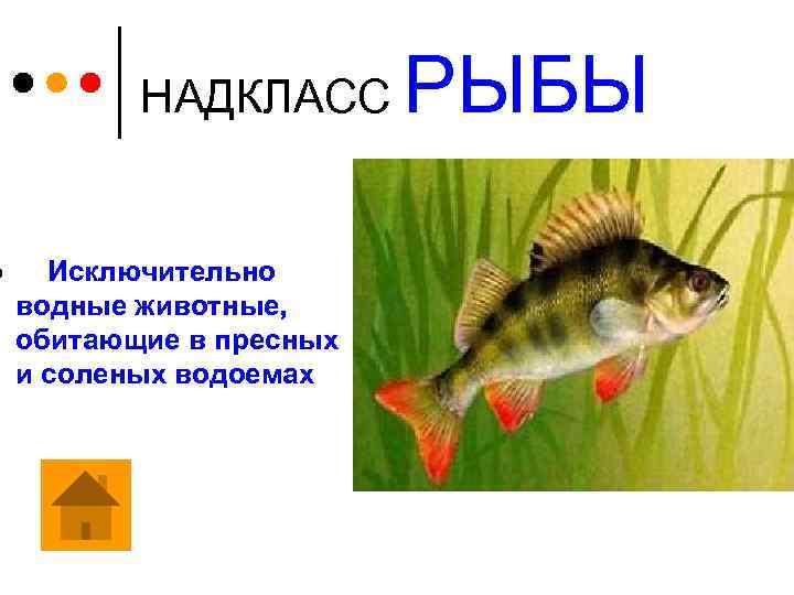 ¢ НАДКЛАСС Исключительно водные животные, обитающие в пресных и соленых водоемах РЫБЫ