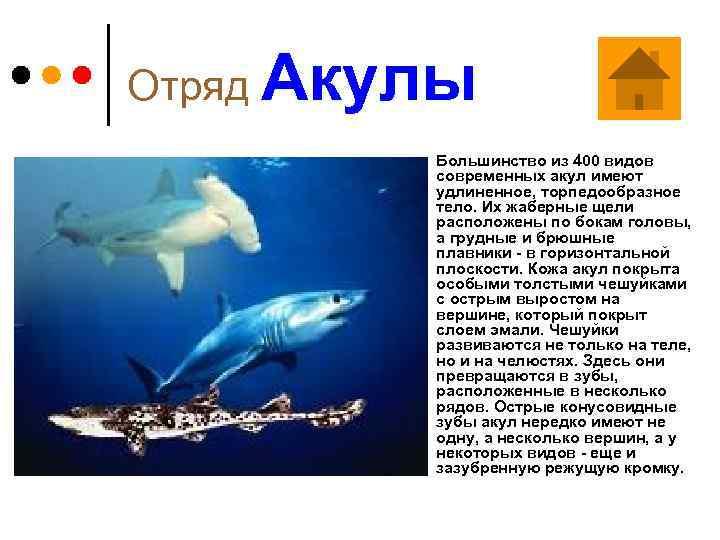 Отряд Акулы ¢ Большинство из 400 видов современных акул имеют удлиненное, торпедообразное тело. Их