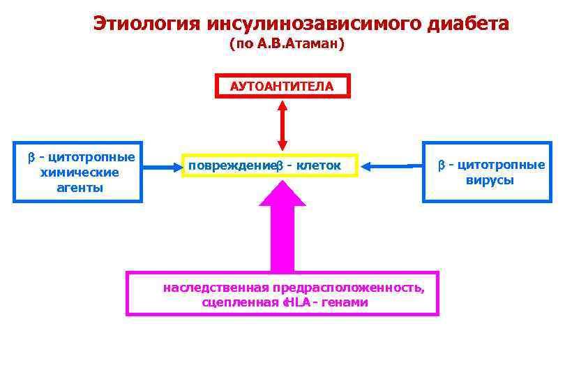 Патофизиология углеводного обмена Сахарный диабет..