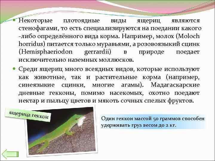 Некоторые плотоядные виды ящериц являются стенофагами, то есть специализируются на поедании какого -либо