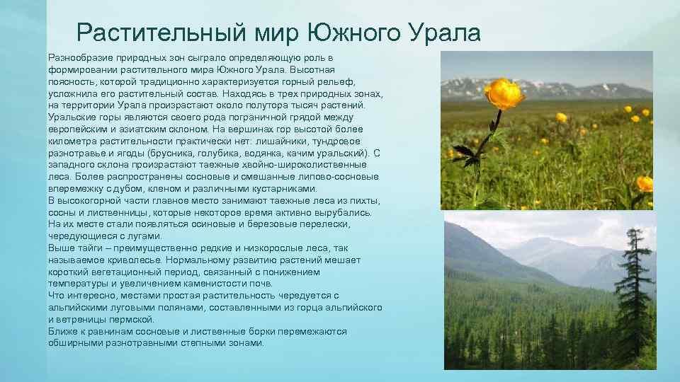 Растительный мир Южного Урала Разнообразие природных зон сыграло определяющую роль в формировании растительного мира