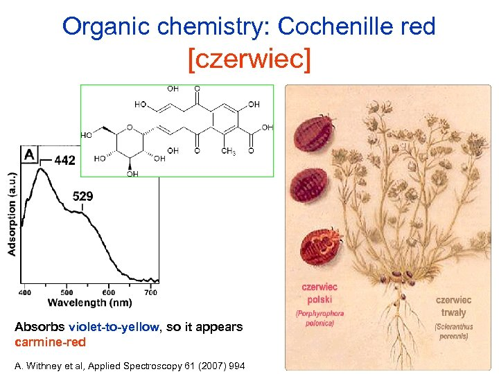 Organic chemistry: Cochenille red [czerwiec] Absorbs violet-to-yellow, so it appears carmine-red A. Withney et