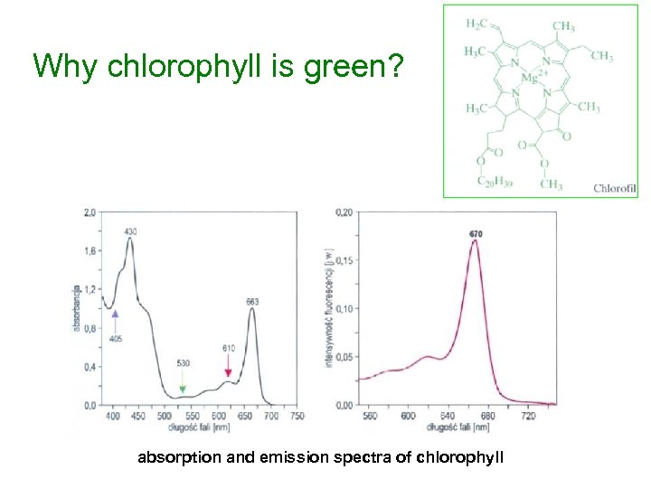 Why chlorophyll is green? absorption and emission spectra of chlorophyll