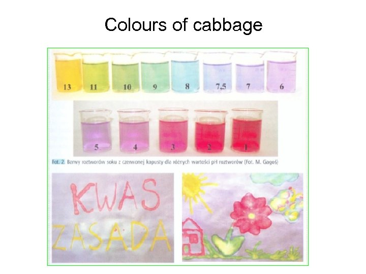 Colours of cabbage