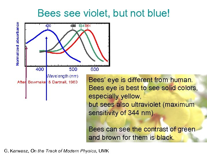 Bees see violet, but not blue! Bees' eye is different from human. Bees eye