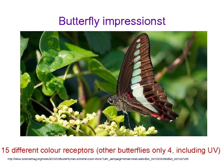 Butterfly impressionst 15 different colour receptors (other butterflies only 4, including UV) http: //www.