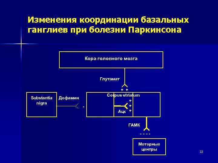 Изменения координации базальных ганглиев при болезни Паркинсона Кора головного мозга Глутамат Substantia nigra Дофамин