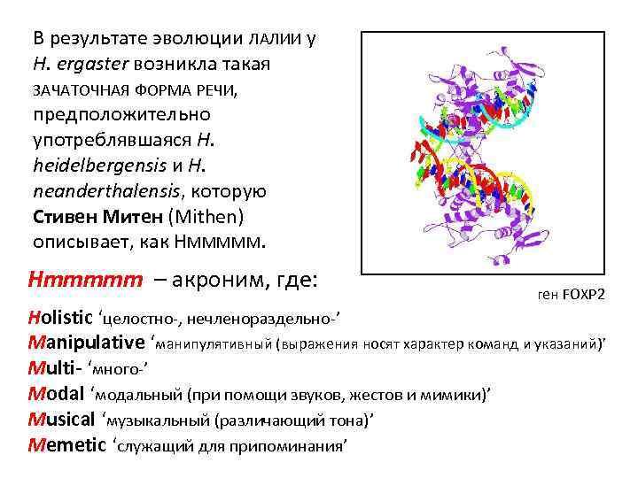 В результате эволюции ЛАЛИИ у H. ergaster возникла такая ЗАЧАТОЧНАЯ ФОРМА РЕЧИ, предположительно употреблявшаяся