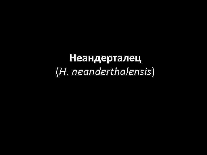 Неандерталец (H. neanderthalensis)