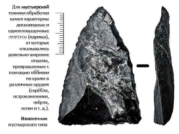 Для мустьерской техники обработки камня характерны дисковидные и одноплощадочные НУКЛЕУСЫ (ядрища), от которых откалывались