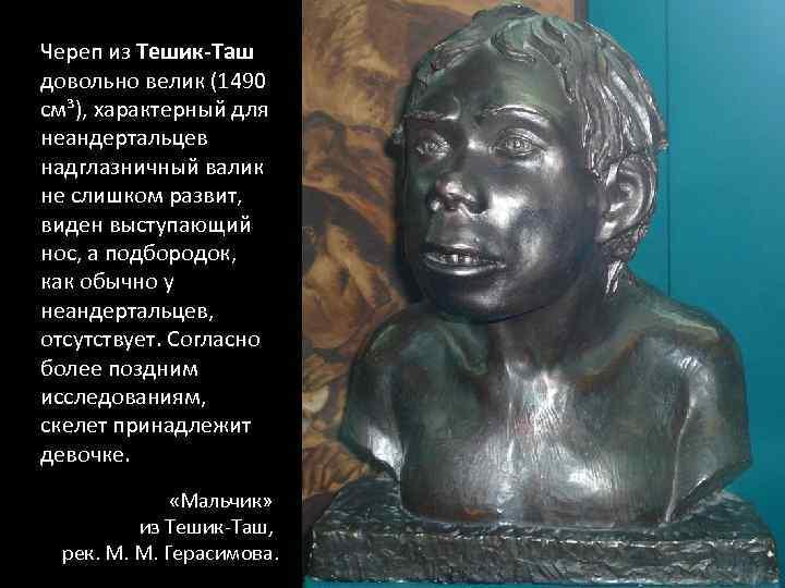 Череп из Тешик-Таш довольно велик (1490 см³), характерный для неандертальцев надглазничный валик не слишком