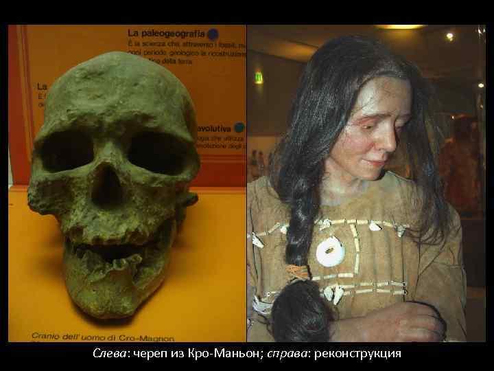 Слева: череп из Кро-Маньон; справа: реконструкция