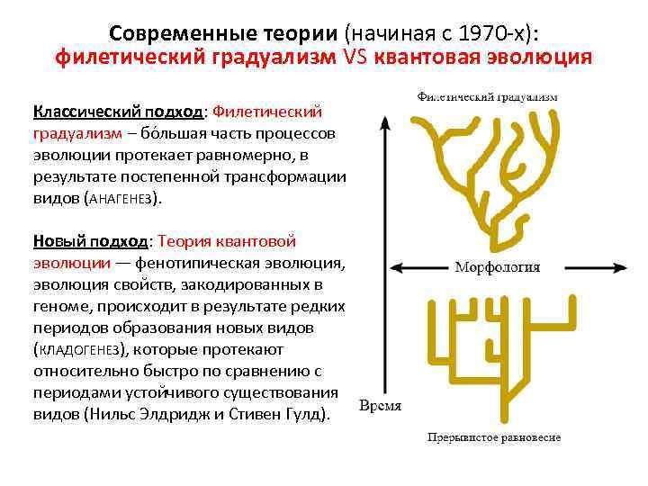 Современные теории (начиная с 1970 -х): филетический градуализм VS квантовая эволюция Классический подход: Филетический