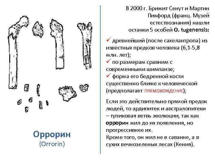 В 2000 г. Брижит Сенут и Мартин Пикфорд (франц. Музей естествознания) нашли останки 5