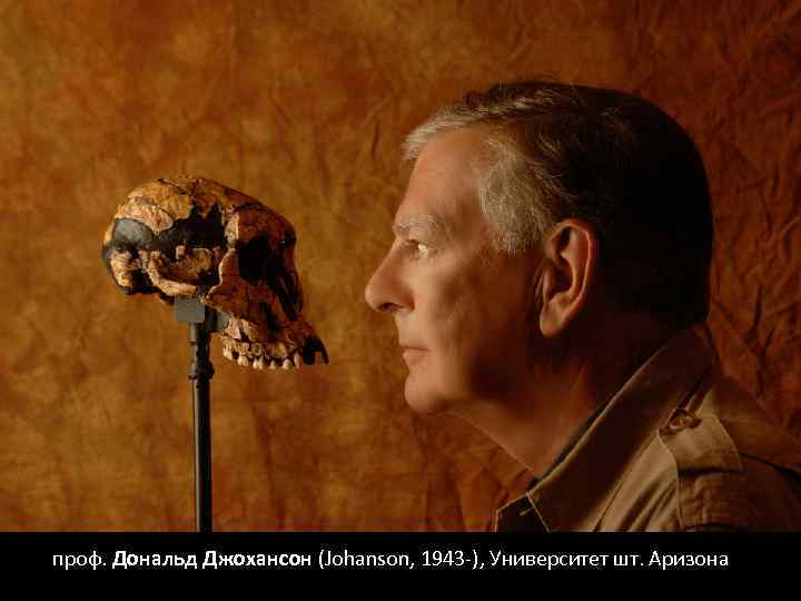 проф. Дональд Джохансон (Johanson, 1943 -), Университет шт. Аризона