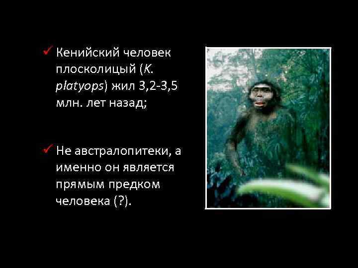 ü Кенийский человек плосколицый (K. platyops) жил 3, 2 -3, 5 млн. лет назад;