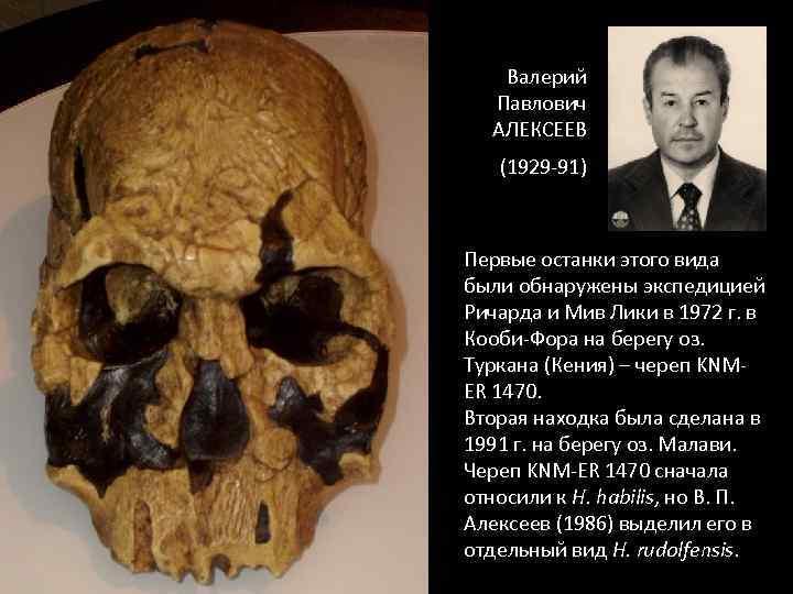 Валерий Павлович АЛЕКСЕЕВ (1929 -91) Первые останки этого вида были обнаружены экспедицией Ричарда и