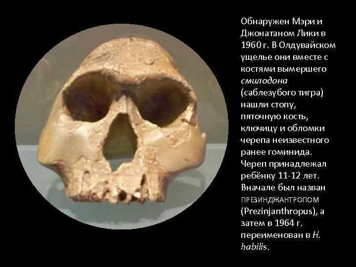 Обнаружен Мэри и Джонатаном Лики в 1960 г. В Олдувайском ущелье они вместе с
