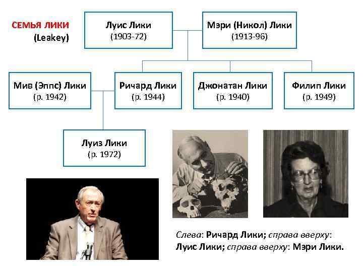 Луис Лики СЕМЬЯ ЛИКИ (Leakey) (1903 -72) Мив (Эппс) Лики (р. 1942) Мэри (Никол)