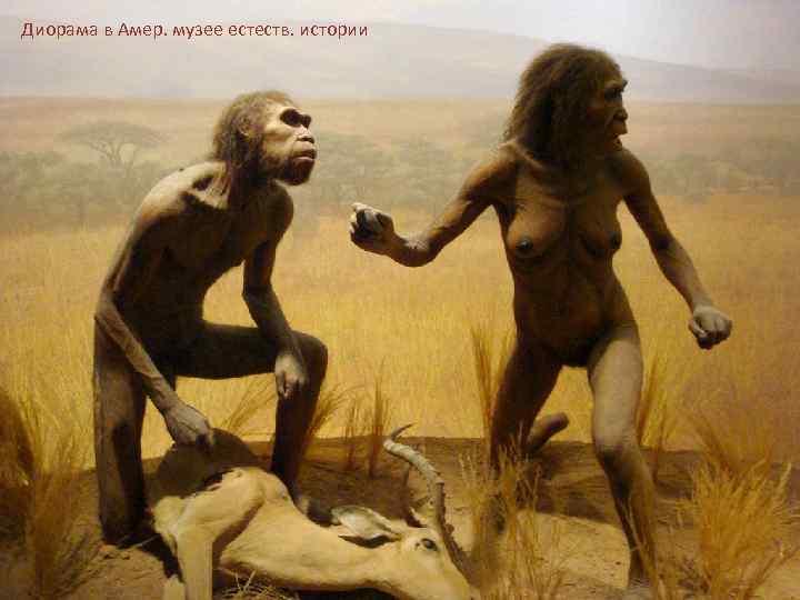 Диорама в Амер. музее естеств. истории