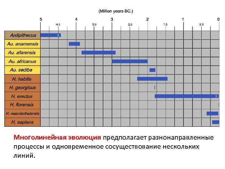 Многолинейная эволюция предполагает разнонаправленные процессы и одновременное сосуществование нескольких линий.