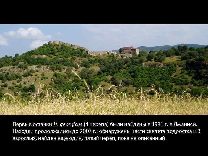 Первые останки H. georgicus (4 черепа) были найдены в 1991 г. в Дманиси. Находки