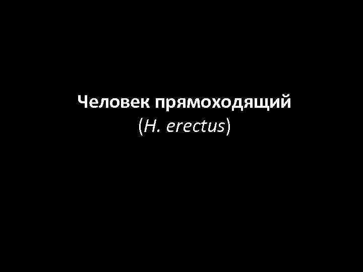Человек прямоходящий (H. erectus)