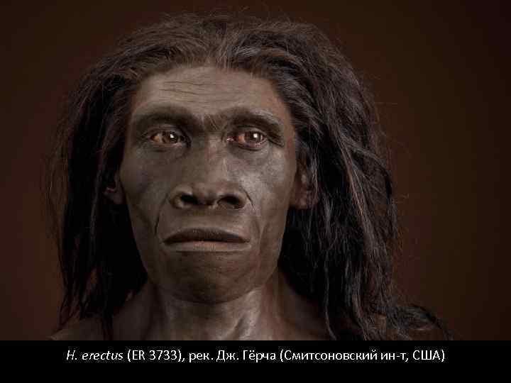 H. erectus (ER 3733), рек. Дж. Гёрча (Смитсоновский ин-т, США)
