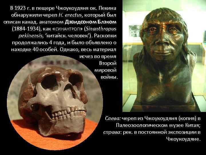 В 1923 г. в пещере Чжоукоудяня ок. Пекина обнаружили череп H. erectus, который был