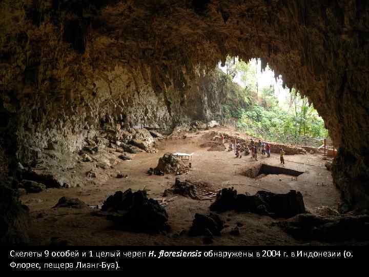 Скелеты 9 особей и 1 целый череп H. floresiensis обнаружены в 2004 г. в