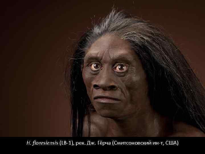 H. floresiensis (LB-1), рек. Дж. Гёрча (Смитсоновский ин-т, США)