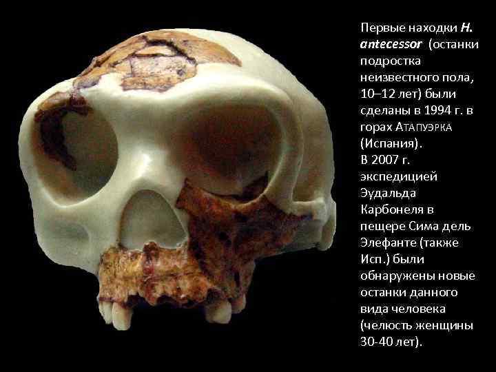 Первые находки H. antecessor (останки подростка неизвестного пола, 10– 12 лет) были сделаны в