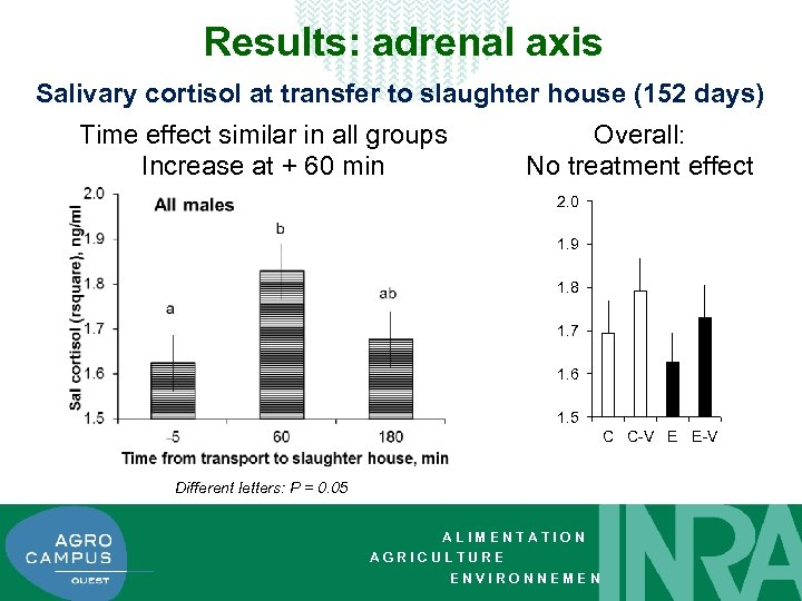 Results: adrenal axis Salivary cortisol at transfer to slaughter house (152 days) Time effect